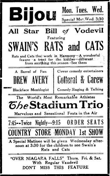 swainsratsandcats