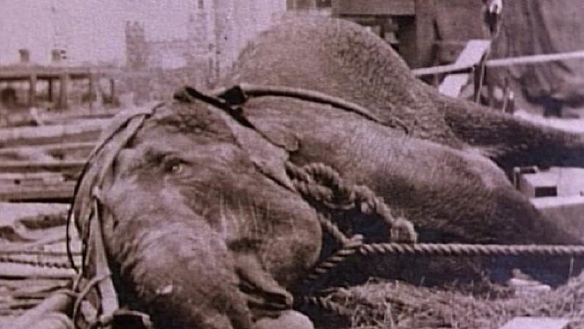 Electrocuted Topsy Elephant