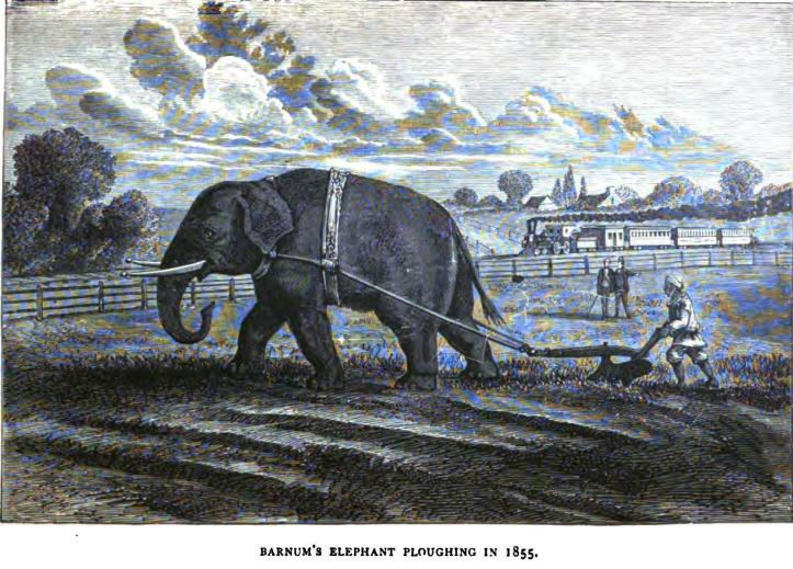 Barnum's_Elephant_Plowing,_1855