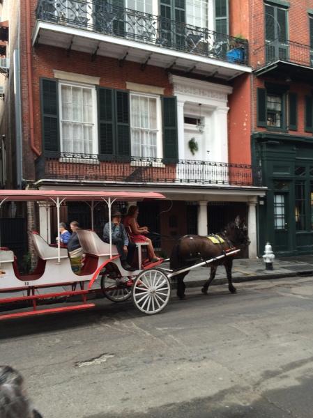 Mule-drawn conveyance