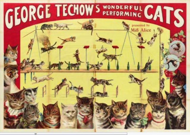 techowcatsreal