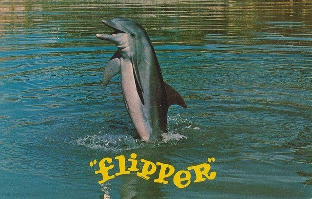 "For National Dolphin Day: We Catch and Release ""Flipper ..."