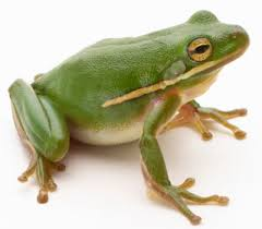 His Descendants Were Stingy and Insulting on the Issue of Photographs, So Here is a Picture of a Frog